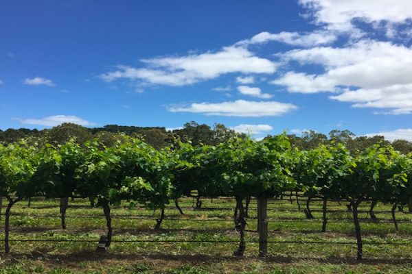 South-Australian-Wineries